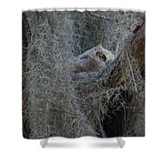 Great Horned Owl Fledgling Shower Curtain