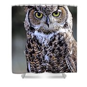 Great Horned Owl IIi Shower Curtain