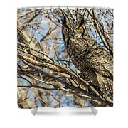 Great Horned Owl In Cottonwood Tree Shower Curtain