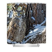 Great Horned Owl On Snowy Branch Shower Curtain