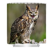 Great Horned Owl Screeching Shower Curtain