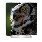 Great Horned Owl Shower Curtain by Sue Harper