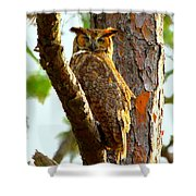 Great Horned Owl Wink Shower Curtain