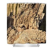 Great Horned Owlet Two Shower Curtain