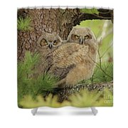 Great Horned Owlets Shower Curtain