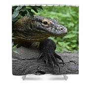 Great Look At A Komodo Dragon With Long Claws Shower Curtain
