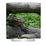 Great Look At A Komodo Monitor Lizard With Long Claws Shower Curtain