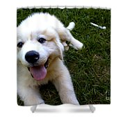 Great Pyrenees Puppy Shower Curtain