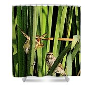 Great Reed Warbler Shower Curtain