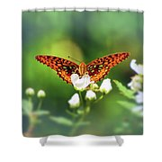 Great Spangled Fritillary Looking At Me Shower Curtain