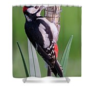 Great Spotted Woodpecker 1  Shower Curtain