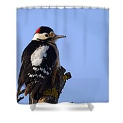 Great Spotted Woodpecker Against Blue Sky Shower Curtain