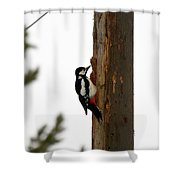 Great Spotted Woodpecker Shower Curtain