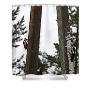 Great Spotted Woodpeckers Shower Curtain
