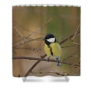 Great Tit Female Shower Curtain