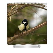 Great Tit Male 2 Shower Curtain