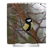 Great Tit Male Shower Curtain