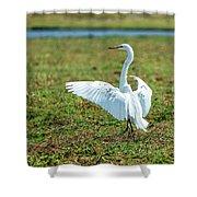 Great White Egret Ahoy Shower Curtain