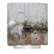 Great White Egret And Ducks Shower Curtain
