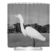 Great White Egret Black And White Shower Curtain