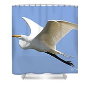 Great White Egret In Flight . 40d6845 Shower Curtain
