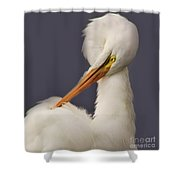 Great White Egret Posing Shower Curtain