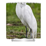 Great White Egret Vertical Shower Curtain