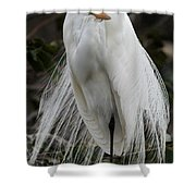 Great White Egret Windblown Shower Curtain