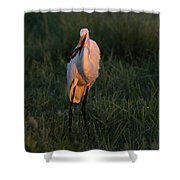 Great White Egret With Armored Catfish Shower Curtain