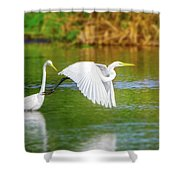 Great White Egrets Shower Curtain