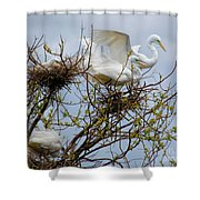 Great Egrets, Nest Building Shower Curtain
