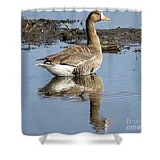 Great White Fronted Goose Shower Curtain