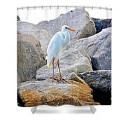 Great White Heron Of Florida Shower Curtain