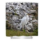 Great White Heron Race Shower Curtain