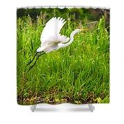 Great White Heron Takeoff Shower Curtain