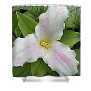 Great White Trillium Shower Curtain