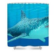 Great White Shark Undersea Shower Curtain
