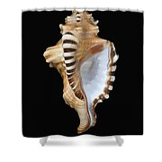 Great White Tooth Shower Curtain