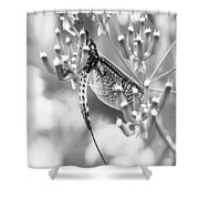 Great Wings  Black And White Dragonfly Shower Curtain
