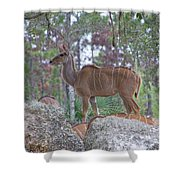 Greater Kudu Female - Rdw002756 Shower Curtain