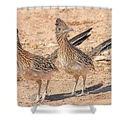 Greater Roadrunner Bird Shower Curtain