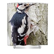 Greater Spotted Woodpecker Shower Curtain