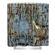 Greater Yellowleg In Reeds Shower Curtain