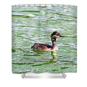 Grebe On Green Water Shower Curtain