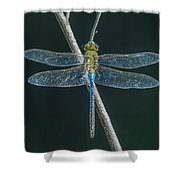 Green And Blue Dragonfly Shower Curtain