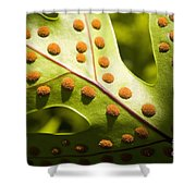 Green And Orange Leaf Shower Curtain