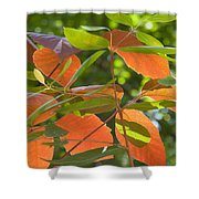 Green And Orange Leaves Shower Curtain
