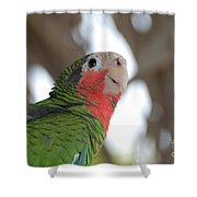 Green And Red Conure With Ruffled Feathers Shower Curtain