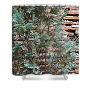 Green And Red - Cypress Branches Over Antique Roman Brick Wall Shower Curtain