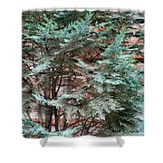 Green And Red - Slender Cypress Branches Over Rough Roman Brick Wall Shower Curtain